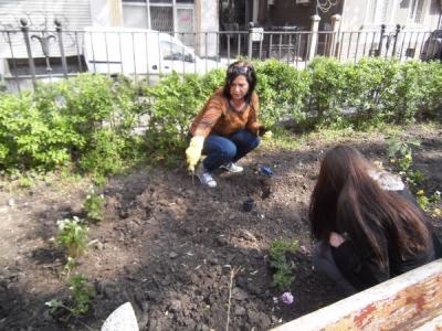 Градина3